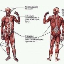 Изометрические упражнения (статические нагрузки)